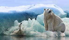 500+ Free Polar Bear & Bear Photos - Pixabay