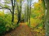 Image result for forest path images free